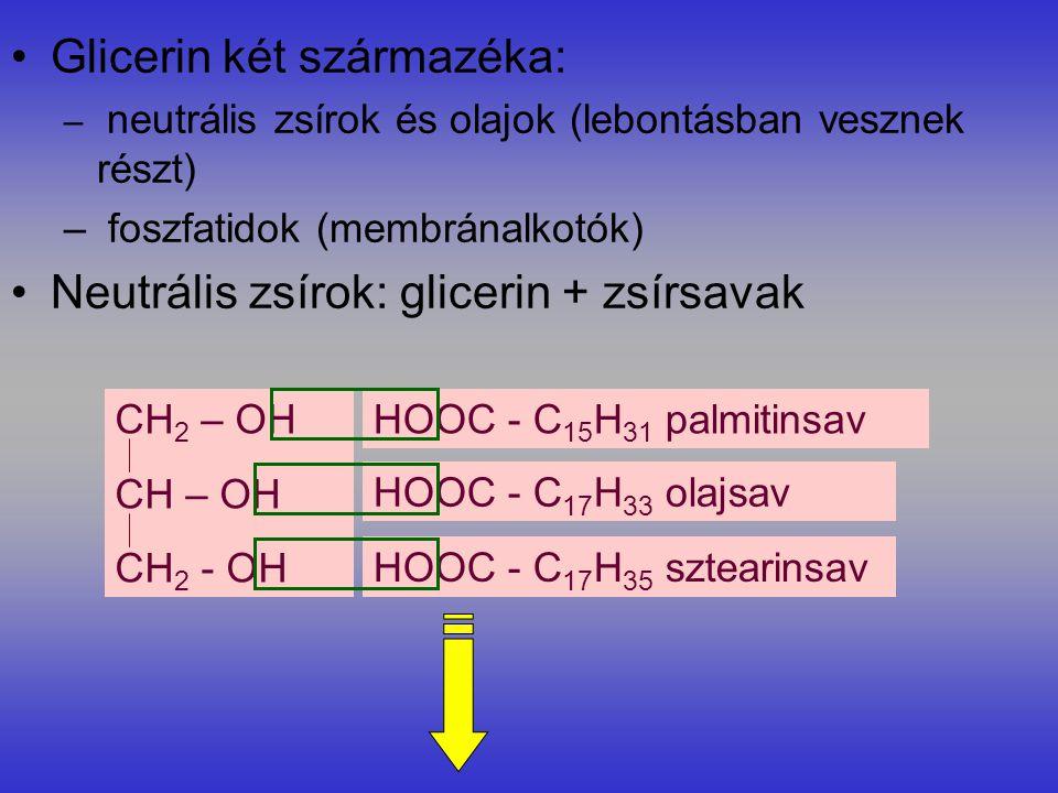 Glicerin két származéka: – neutrális zsírok és olajok (lebontásban vesznek részt) – foszfatidok (membránalkotók) Neutrális zsírok: glicerin + zsírsavak HOOC - C 15 H 31 palmitinsav HOOC - C 17 H 33 olajsav HOOC - C 17 H 35 sztearinsav CH 2 – OH CH – OH CH 2 - OH