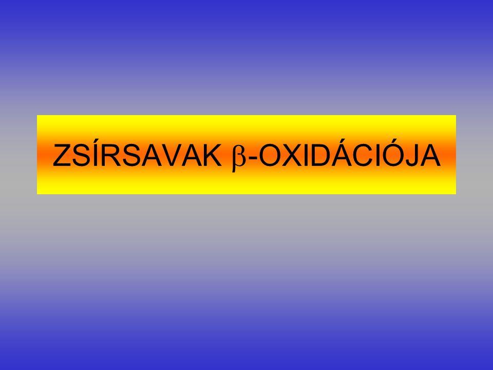 ZSÍRSAVAK  -OXIDÁCIÓJA