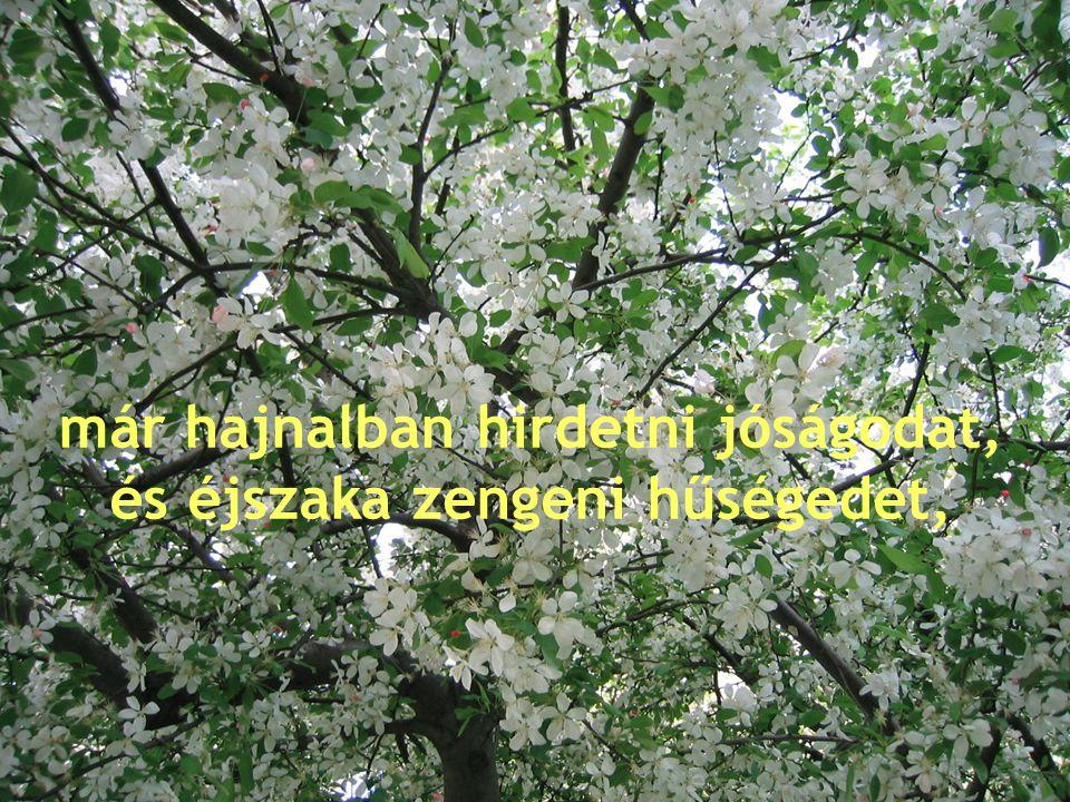 Az Úr házában van elültetve, Istenének csarnokában bont virágot.