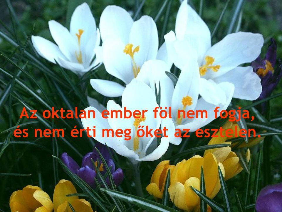 Sarjadhatnak a bűnösök, akár a fű, és virágozhatnak a gonosztevők,