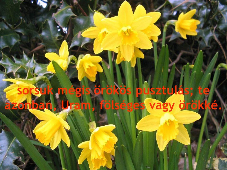 sorsuk mégis örökös pusztulás; te azonban, Uram, fölséges vagy örökké.