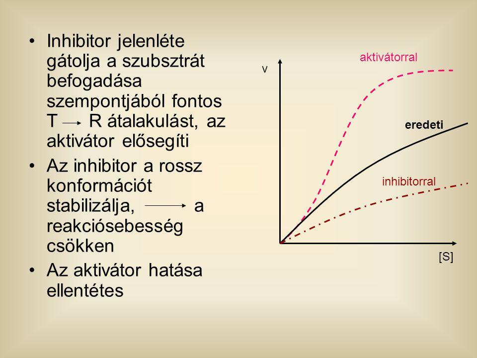 Inhibitor jelenléte gátolja a szubsztrát befogadása szempontjából fontos T R átalakulást, az aktivátor elősegíti Az inhibitor a rossz konformációt sta