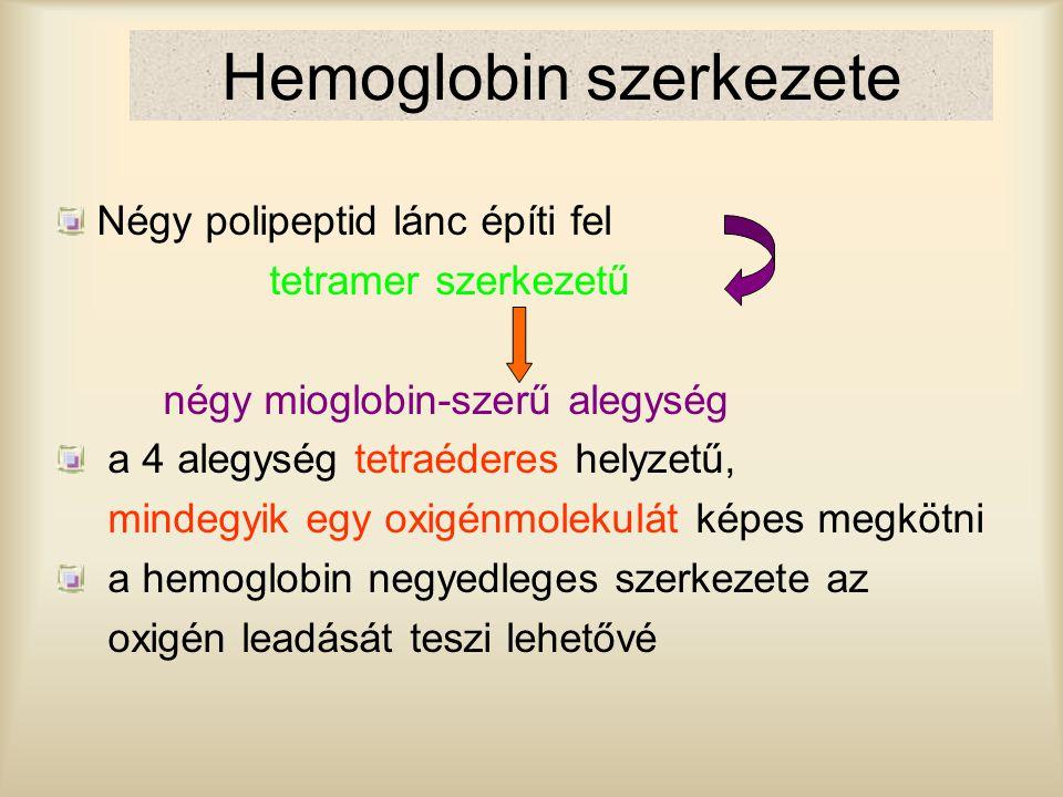 Hemoglobin szerkezete Négy polipeptid lánc építi fel tetramer szerkezetű négy mioglobin-szerű alegység a 4 alegység tetraéderes helyzetű, mindegyik eg