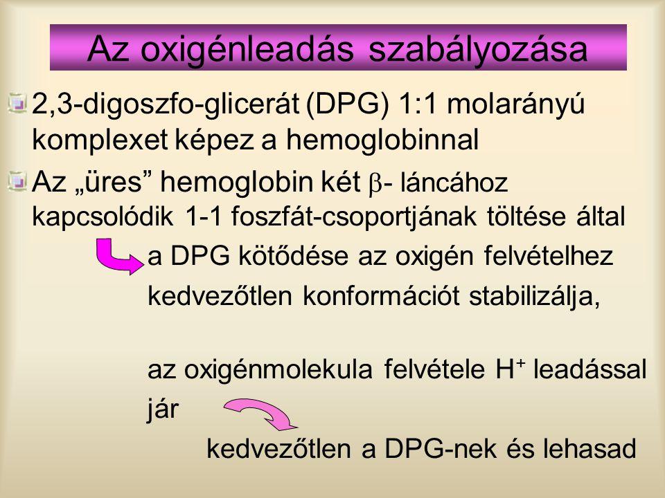 """Az oxigénleadás szabályozása 2,3-digoszfo-glicerát (DPG) 1:1 molarányú komplexet képez a hemoglobinnal Az """"üres"""" hemoglobin két  - láncához kapcsolód"""