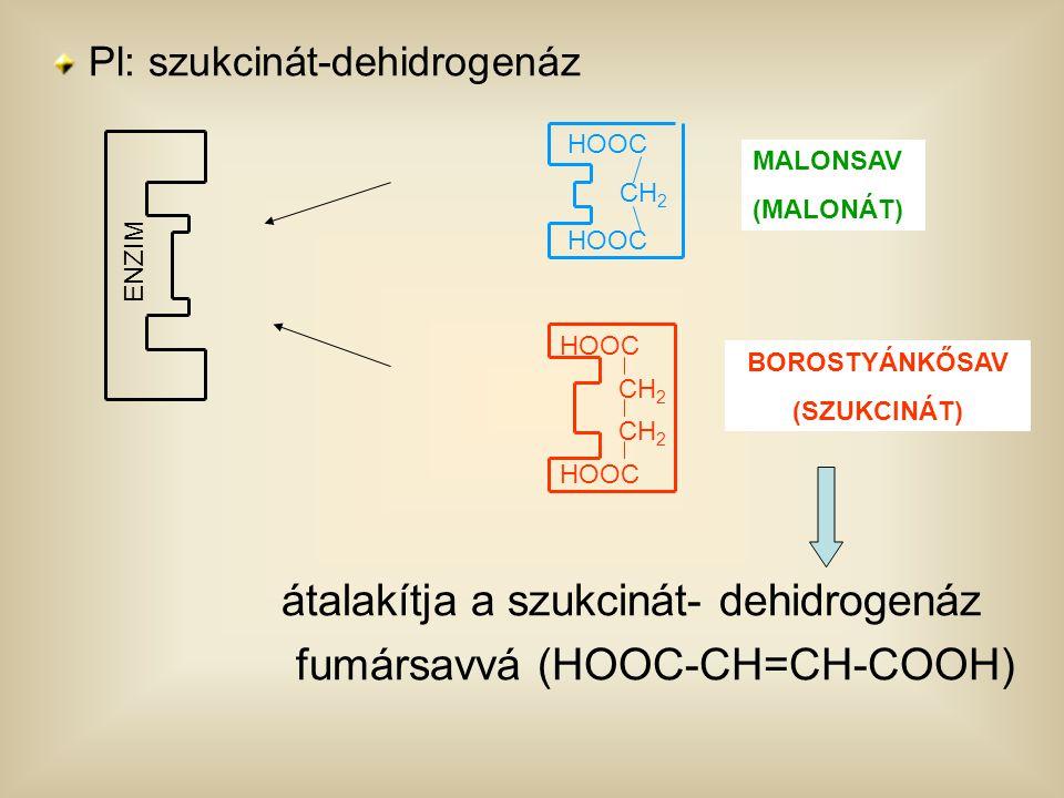 Pl: szukcinát-dehidrogenáz átalakítja a szukcinát- dehidrogenáz fumársavvá (HOOC-CH=CH-COOH) ENZIM HOOC CH 2 HOOC MALONSAV (MALONÁT) HOOC CH 2 HOOC BO