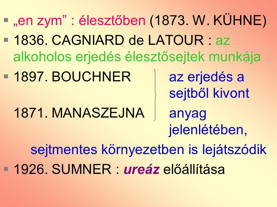 """ """"en zym"""" : élesztőben (1873. W. KÜHNE)  1836. CAGNIARD de LATOUR : az alkoholos erjedés élesztősejtek munkája  1897. BOUCHNER az erjedés a sejtből"""