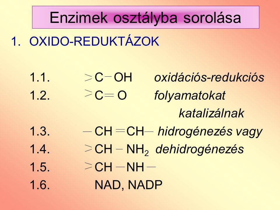 Enzimek osztályba sorolása 1.OXIDO-REDUKTÁZOK 1.1. C OH oxidációs-redukciós 1.2. C O folyamatokat katalizálnak 1.3. CH CH hidrogénezés vagy 1.4.CH NH