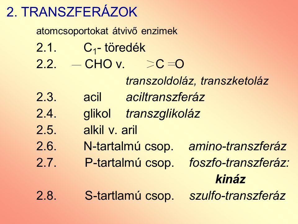 2. TRANSZFERÁZOK atomcsoportokat átvivő enzimek 2.1. C 1 - töredék 2.2. CHO v. C O transzoldoláz, transzketoláz 2.3. acilaciltranszferáz 2.4. glikoltr