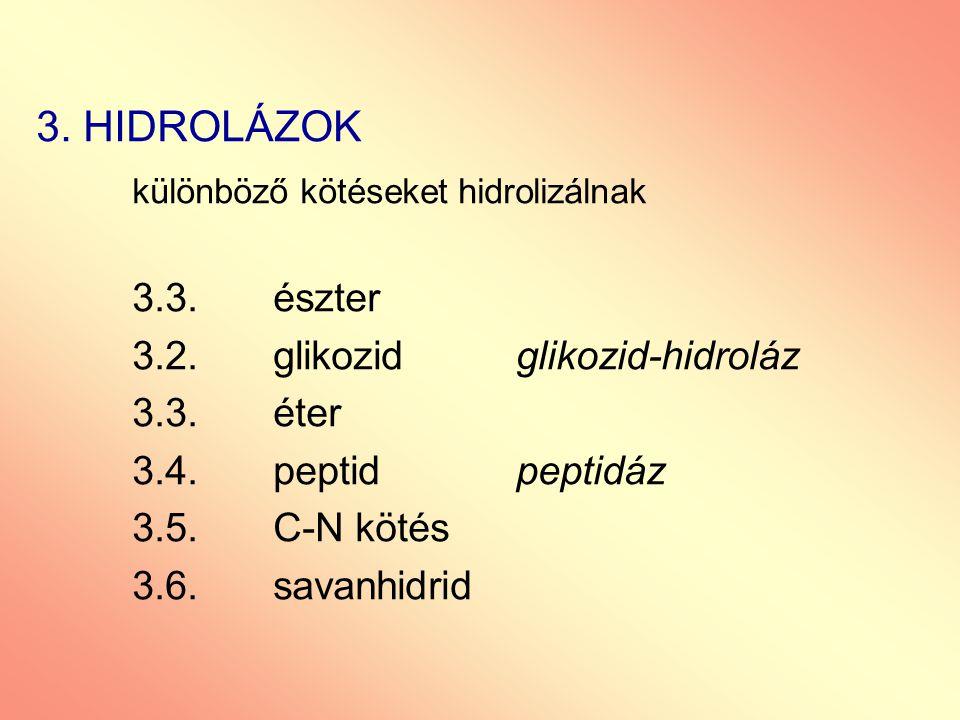 3. HIDROLÁZOK különböző kötéseket hidrolizálnak 3.3. észter 3.2. glikozidglikozid-hidroláz 3.3. éter 3.4. peptidpeptidáz 3.5. C-N kötés 3.6. savanhidr