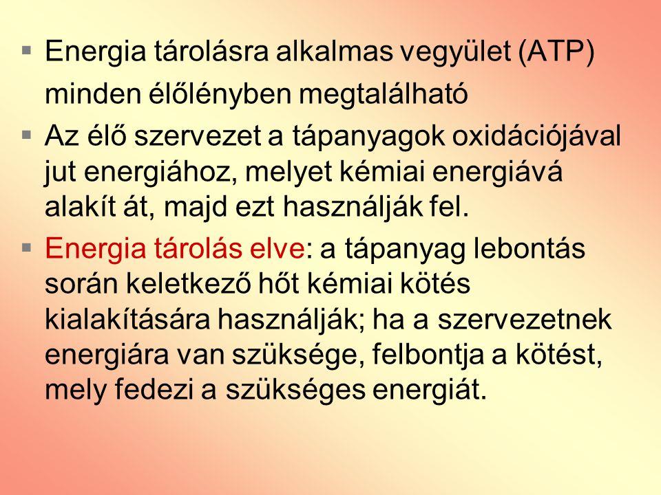  Energia tárolásra alkalmas vegyület (ATP) minden élőlényben megtalálható  Az élő szervezet a tápanyagok oxidációjával jut energiához, melyet kémiai