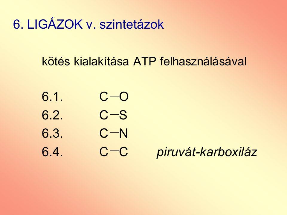 6. LIGÁZOK v. szintetázok kötés kialakítása ATP felhasználásával 6.1.C O 6.2.C S 6.3.C N 6.4.C Cpiruvát-karboxiláz