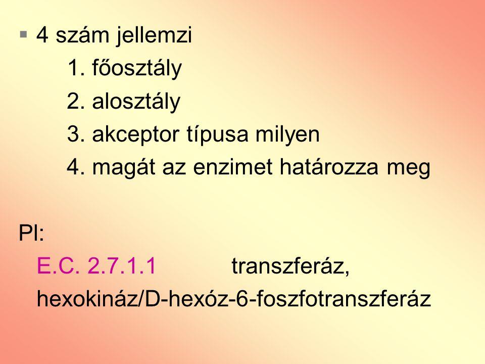  4 szám jellemzi 1. főosztály 2. alosztály 3. akceptor típusa milyen 4. magát az enzimet határozza meg Pl: E.C. 2.7.1.1 transzferáz, hexokináz/D-hexó