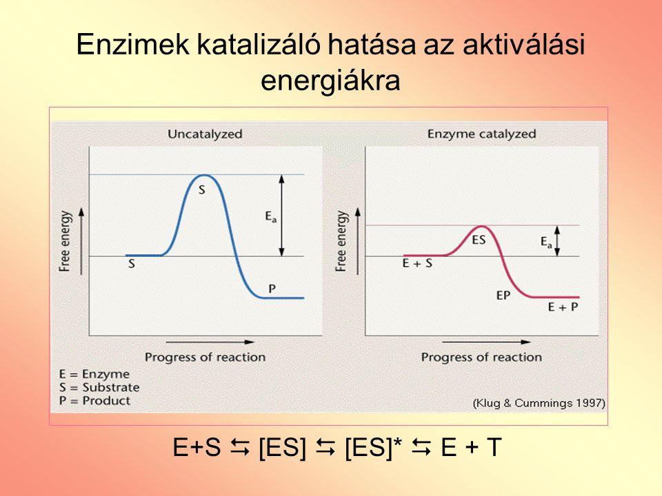 Enzimek katalizáló hatása az aktiválási energiákra E+S  [ES]  [ES]*  E + T