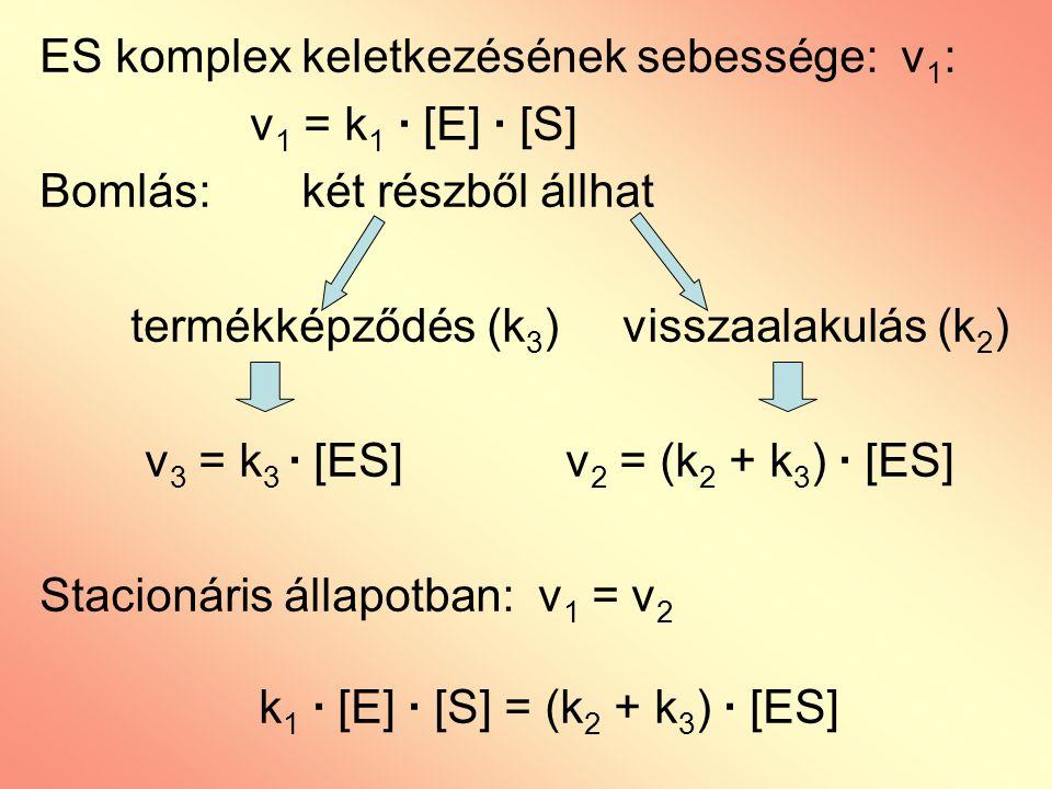 ES komplex keletkezésének sebessége: v 1 : v 1 = k 1 · [E] · [S] Bomlás: két részből állhat termékképződés (k 3 ) visszaalakulás (k 2 ) v 3 = k 3 · [E