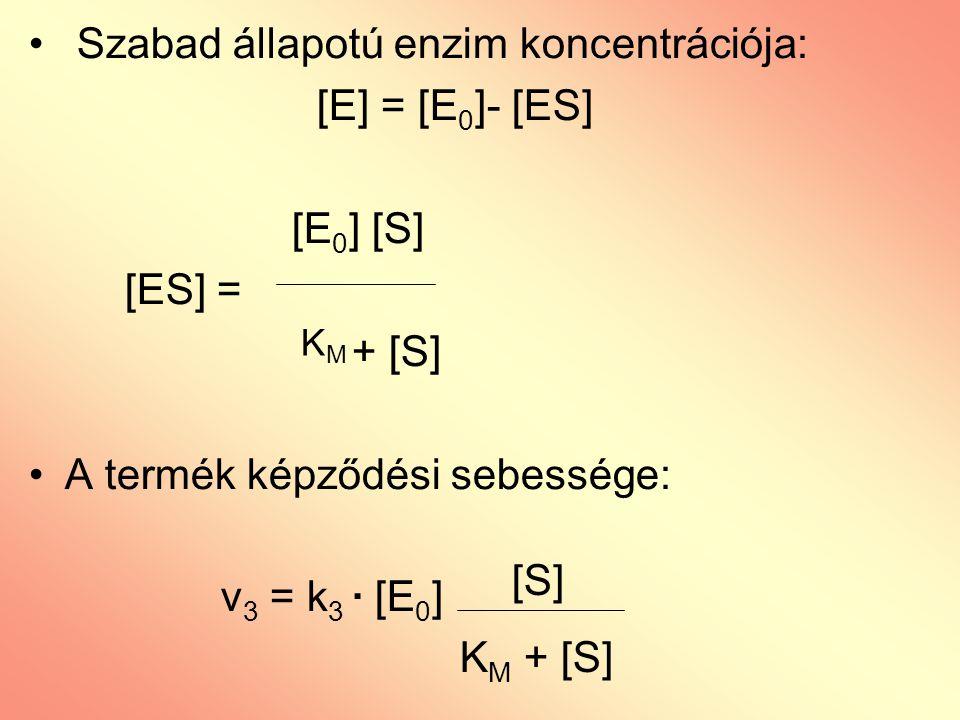 Szabad állapotú enzim koncentrációja: [E] = [E 0 ]- [ES] [E 0 ] [S] [ES] = + [S] A termék képződési sebessége: v 3 = k 3 · [E 0 ] KMKM [S] K M + [S]