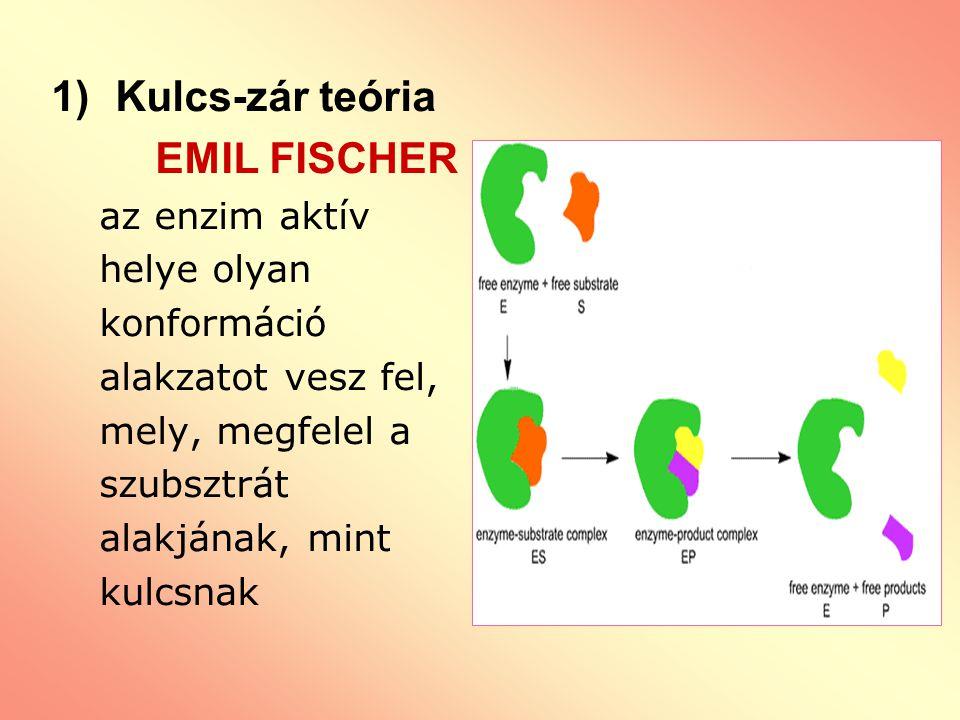 1)Kulcs-zár teória EMIL FISCHER az enzim aktív helye olyan konformáció alakzatot vesz fel, mely, megfelel a szubsztrát alakjának, mint kulcsnak