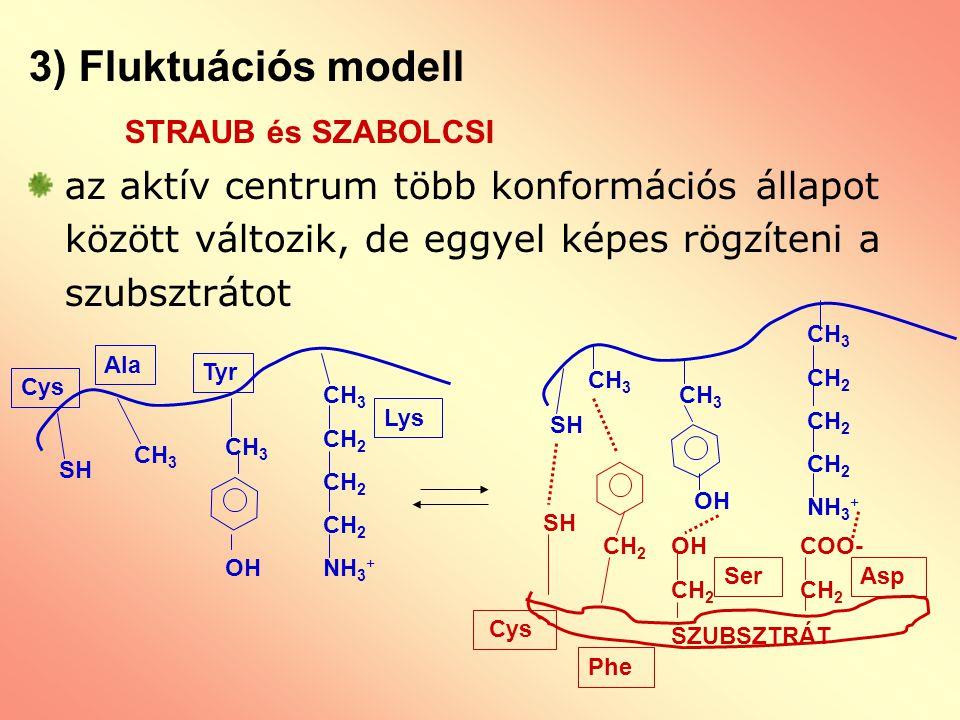 3) Fluktuációs modell STRAUB és SZABOLCSI az aktív centrum több konformációs állapot között változik, de eggyel képes rögzíteni a szubsztrátot CH 3 CH