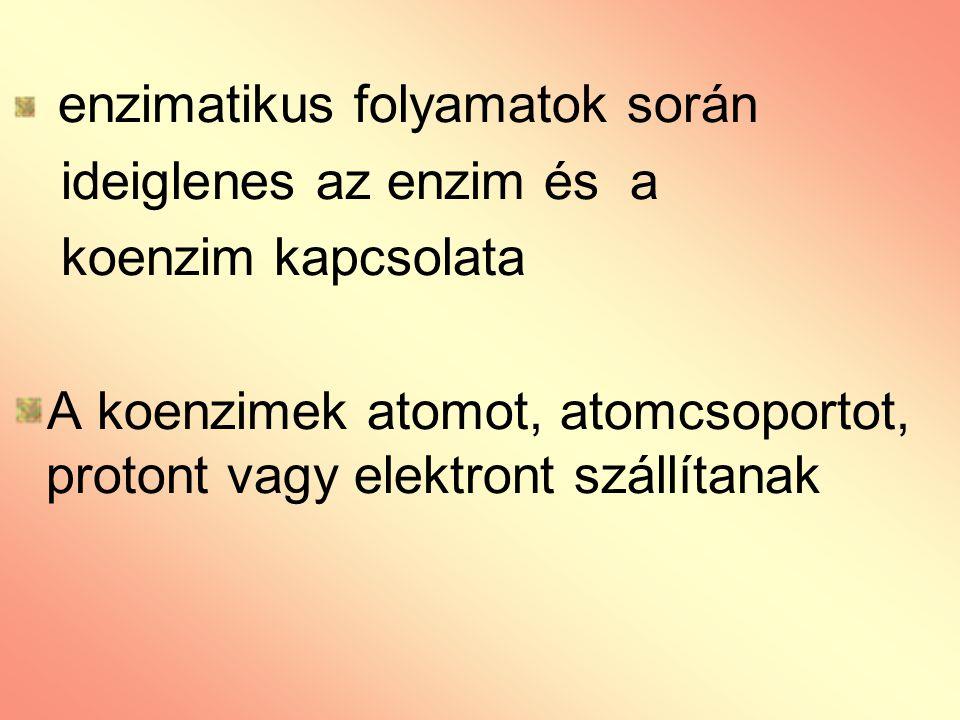 enzimatikus folyamatok során ideiglenes az enzim és a koenzim kapcsolata A koenzimek atomot, atomcsoportot, protont vagy elektront szállítanak