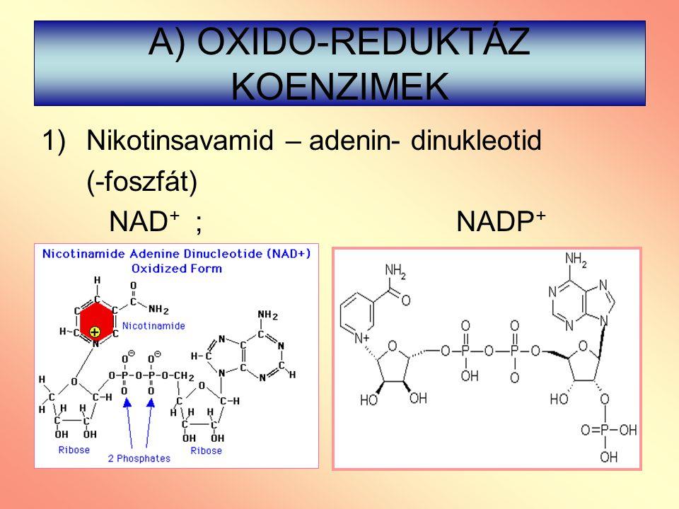 A) OXIDO-REDUKTÁZ KOENZIMEK 1)Nikotinsavamid – adenin- dinukleotid (-foszfát) NAD + ; NADP +