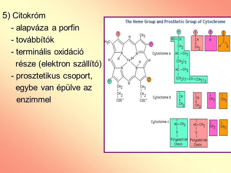 5 ) Citokróm - alapváza a porfin - továbbítók - terminális oxidáció része (elektron szállító) - prosztetikus csoport, egybe van épülve az enzimmel