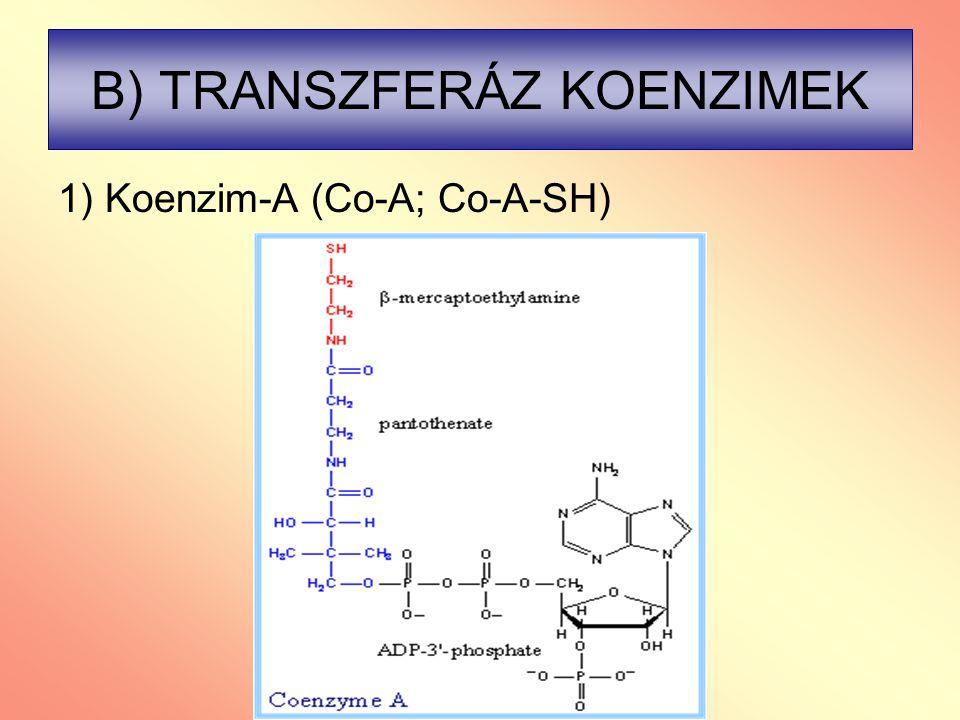 B) TRANSZFERÁZ KOENZIMEK 1) Koenzim-A (Co-A; Co-A-SH)