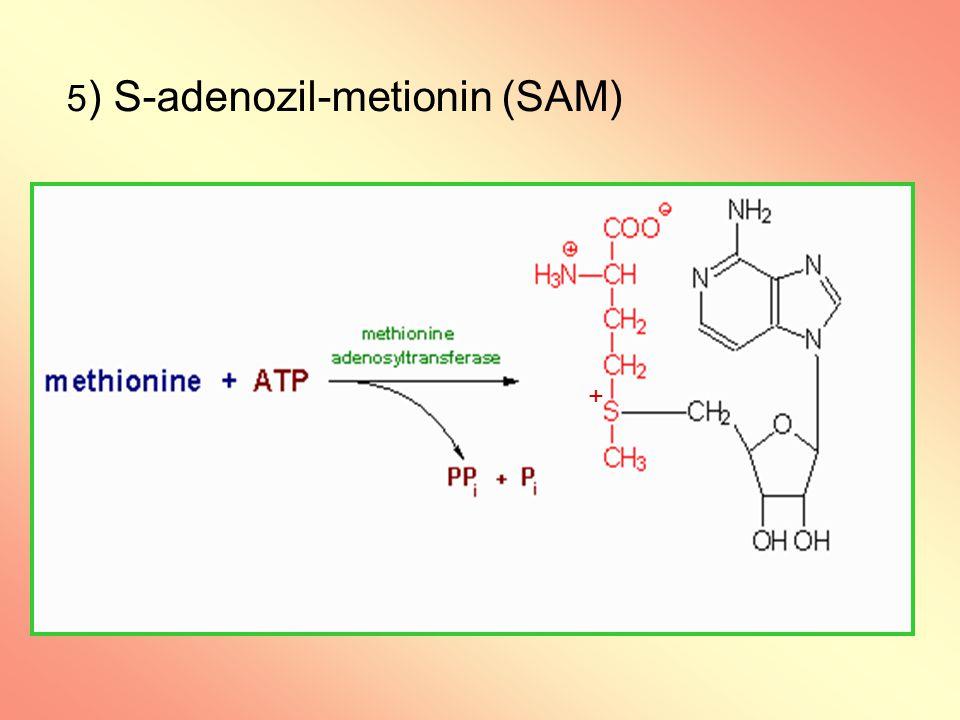 5 ) S-adenozil-metionin (SAM) +