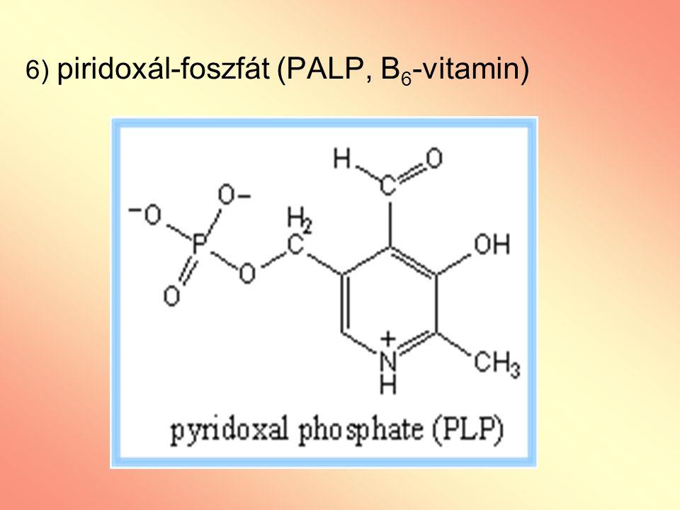 6) piridoxál-foszfát (PALP, B 6 -vitamin)