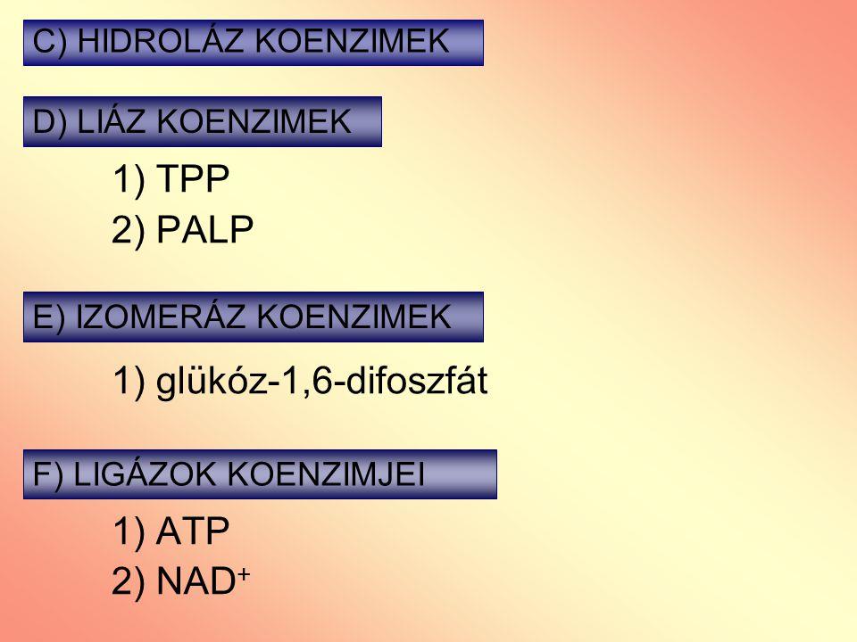 1) TPP 2) PALP 1) glükóz-1,6-difoszfát 1) ATP 2) NAD + C) HIDROLÁZ KOENZIMEK D) LIÁZ KOENZIMEK E) IZOMERÁZ KOENZIMEK F) LIGÁZOK KOENZIMJEI