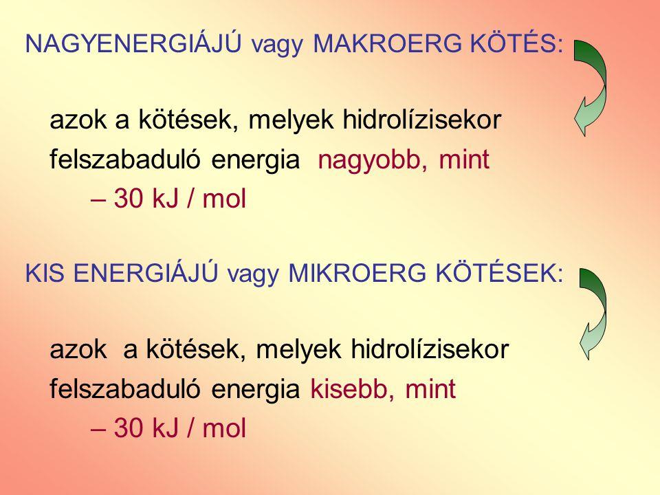 NAGYENERGIÁJÚ vagy MAKROERG KÖTÉS: azok a kötések, melyek hidrolízisekor felszabaduló energia nagyobb, mint – 30 kJ / mol KIS ENERGIÁJÚ vagy MIKROERG