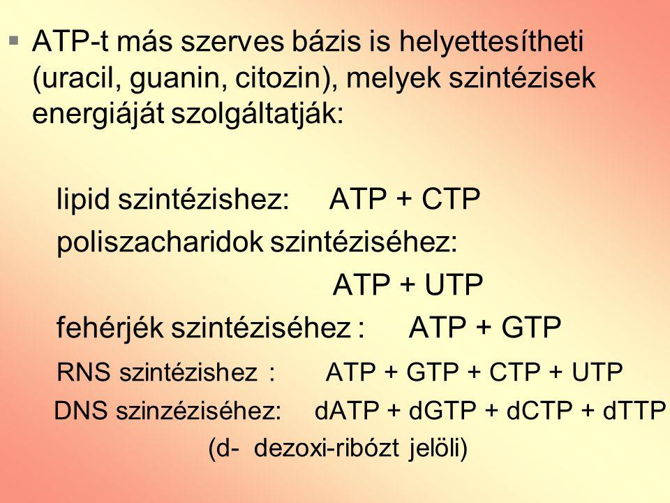  ATP-t más szerves bázis is helyettesítheti (uracil, guanin, citozin), melyek szintézisek energiáját szolgáltatják: lipid szintézishez: ATP + CTP pol
