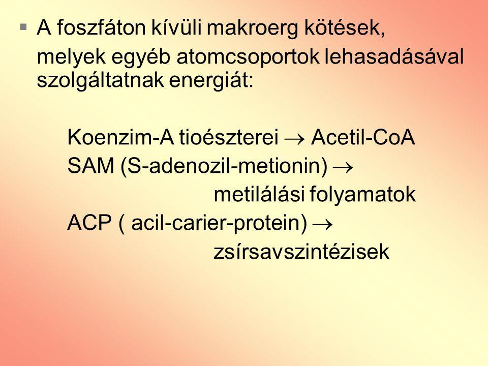  A foszfáton kívüli makroerg kötések, melyek egyéb atomcsoportok lehasadásával szolgáltatnak energiát: Koenzim-A tioészterei  Acetil-CoA SAM (S-aden