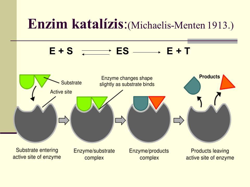 Enzim katalízis: (Michaelis-Menten 1913.) E + S ES E + T