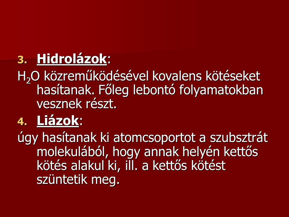 3. Hidrolázok: H 2 O közreműködésével kovalens kötéseket hasítanak. Főleg lebontó folyamatokban vesznek részt. 4. Liázok: úgy hasítanak ki atomcsoport