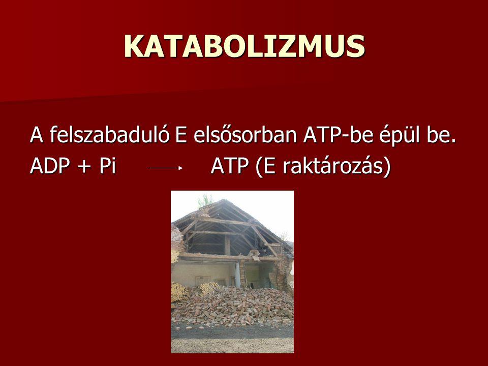 KATABOLIZMUS A felszabaduló E elsősorban ATP-be épül be. ADP + Pi ATP (E raktározás)