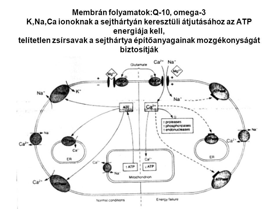 Membrán folyamatok:Q-10, omega-3 K,Na,Ca ionoknak a sejthártyán keresztüli átjutásához az ATP energiája kell, telítetlen zsírsavak a sejthártya építőa