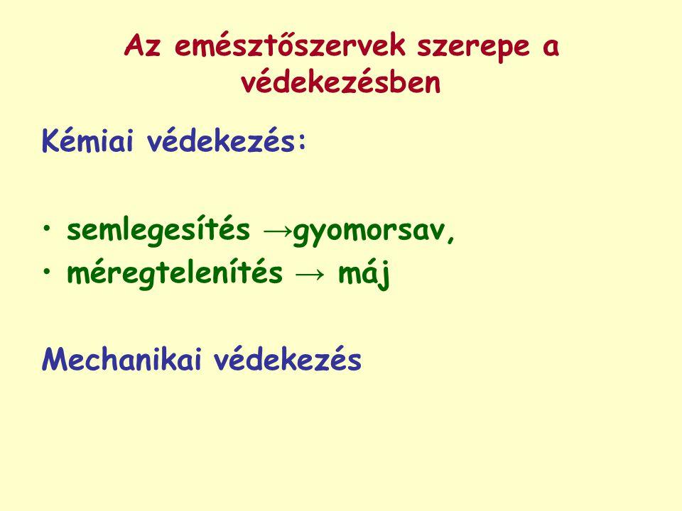 Az emésztőszervek szerepe a védekezésben Kémiai védekezés: semlegesítés → gyomorsav, méregtelenítés → máj Mechanikai védekezés