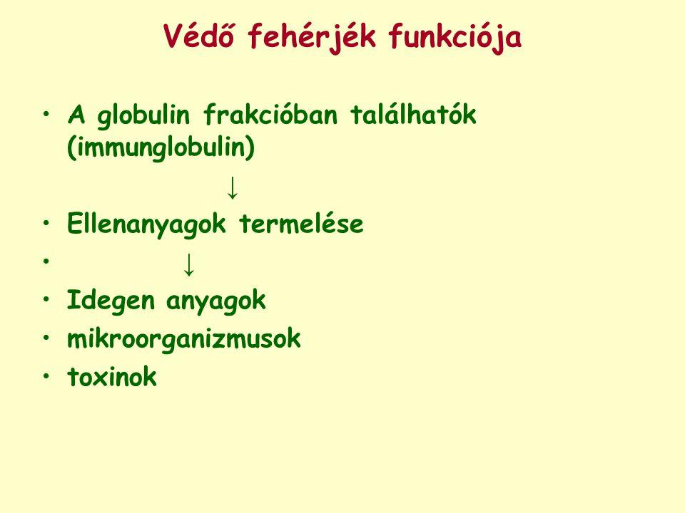 Védő fehérjék funkciója A globulin frakcióban találhatók (immunglobulin) ↓ Ellenanyagok termelése ↓ Idegen anyagok mikroorganizmusok toxinok