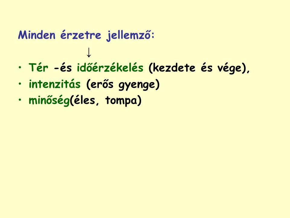 Minden érzetre jellemző: ↓ Tér -és időérzékelés (kezdete és vége), intenzitás (erős gyenge) minőség(éles, tompa)