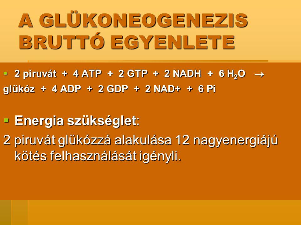 A GLÜKONEOGENEZIS BRUTTÓ EGYENLETE  2 piruvát + 4 ATP + 2 GTP + 2 NADH + 6 H 2 O  glükóz + 4 ADP + 2 GDP + 2 NAD+ + 6 Pi  Energia szükséglet: 2 piruvát glükózzá alakulása 12 nagyenergiájú kötés felhasználását igényli.