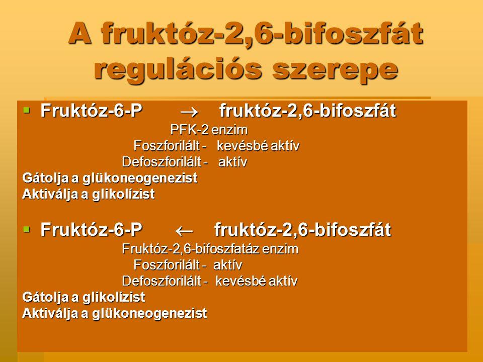 A fruktóz-2,6-bifoszfát regulációs szerepe  Fruktóz-6-P  fruktóz-2,6-bifoszfát PFK-2 enzim PFK-2 enzim Foszforilált - kevésbé aktív Foszforilált - kevésbé aktív Defoszforilált - aktív Defoszforilált - aktív Gátolja a glükoneogenezist Aktiválja a glikolízist  Fruktóz-6-P  fruktóz-2,6-bifoszfát Fruktóz-2,6-bifoszfatáz enzim Fruktóz-2,6-bifoszfatáz enzim Foszforilált - aktív Foszforilált - aktív Defoszforilált - kevésbé aktív Defoszforilált - kevésbé aktív Gátolja a glikolízist Aktiválja a glükoneogenezist