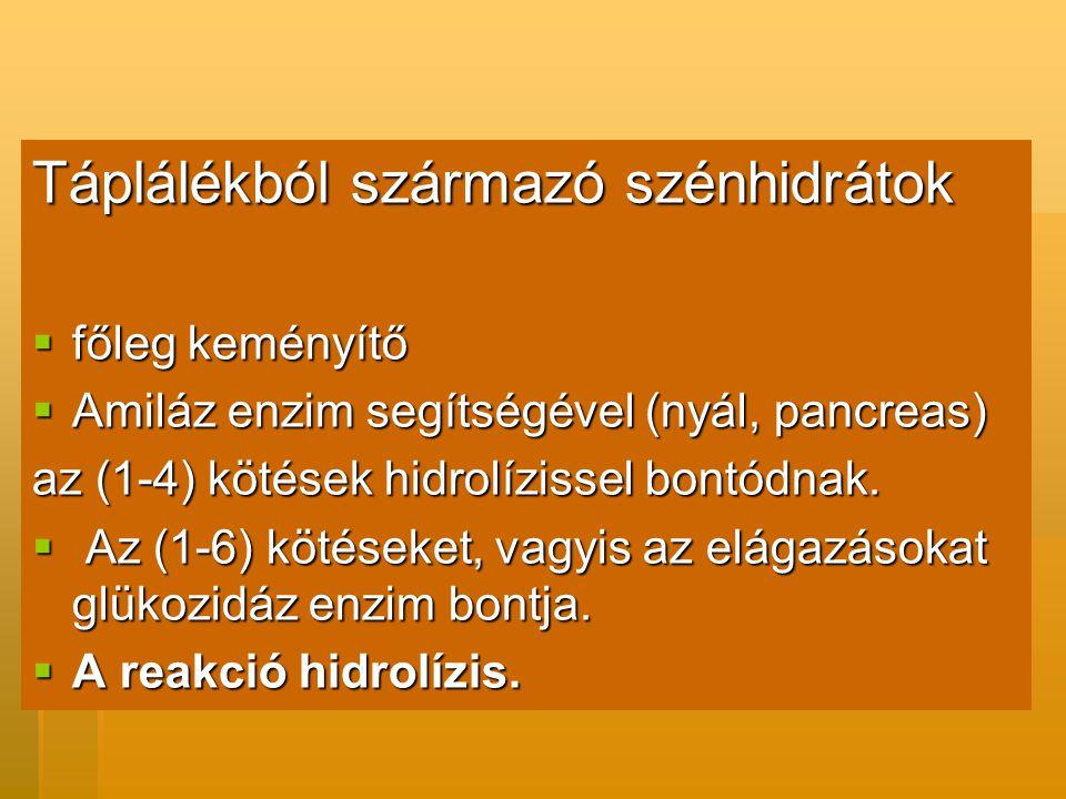 Táplálékból származó szénhidrátok  főleg keményítő  Amiláz enzim segítségével (nyál, pancreas) az (1-4) kötések hidrolízissel bontódnak.