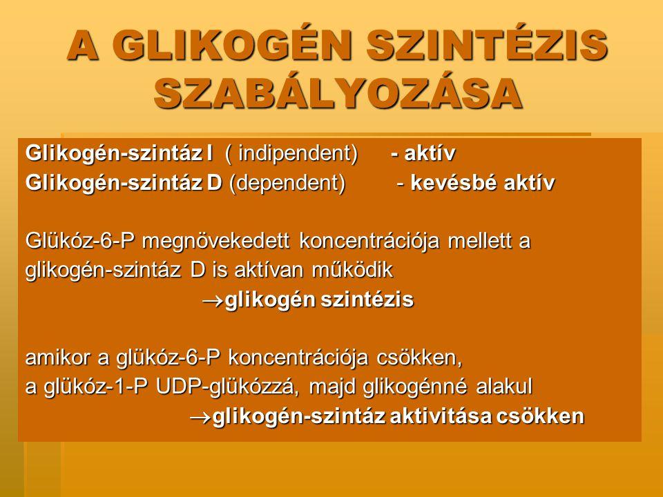 A GLIKOGÉN SZINTÉZIS SZABÁLYOZÁSA Glikogén-szintáz I ( indipendent) - aktív Glikogén-szintáz D (dependent) - kevésbé aktív Glükóz-6-P megnövekedett koncentrációja mellett a glikogén-szintáz D is aktívan működik  glikogén szintézis  glikogén szintézis amikor a glükóz-6-P koncentrációja csökken, a glükóz-1-P UDP-glükózzá, majd glikogénné alakul  glikogén-szintáz aktivitása csökken  glikogén-szintáz aktivitása csökken
