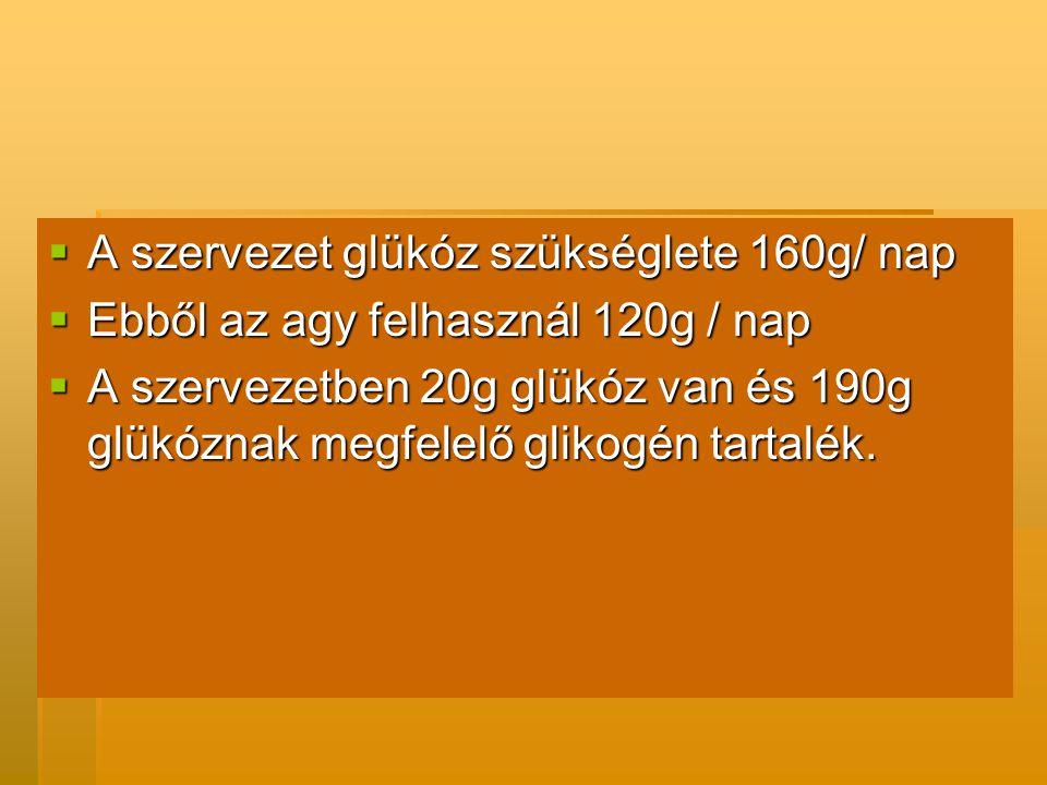  A szervezet glükóz szükséglete 160g/ nap  Ebből az agy felhasznál 120g / nap  A szervezetben 20g glükóz van és 190g glükóznak megfelelő glikogén tartalék.