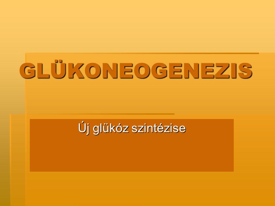 GLÜKONEOGENEZIS Új glükóz szintézise