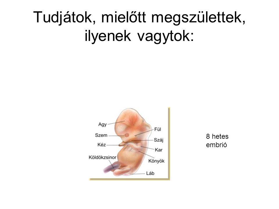 Tudjátok, mielőtt megszülettek, ilyenek vagytok: 8 hetes embrió