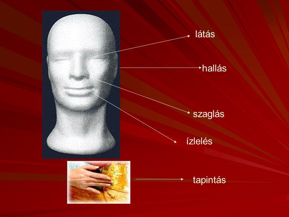 Érzékelés A különböző érzékszerveink által szolgáltatott információk feldolgozása. A különböző érzékszerveink által szolgáltatott információk feldolgo