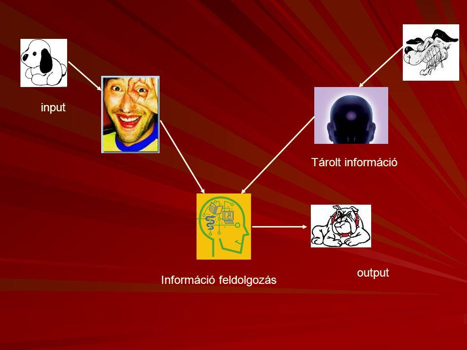 Észlelés  Az érzékszerveink által szolgáltatott információkat összeveti a tárolt információkkal.  Az a folyamat, amellyel a külső világ belső megfel