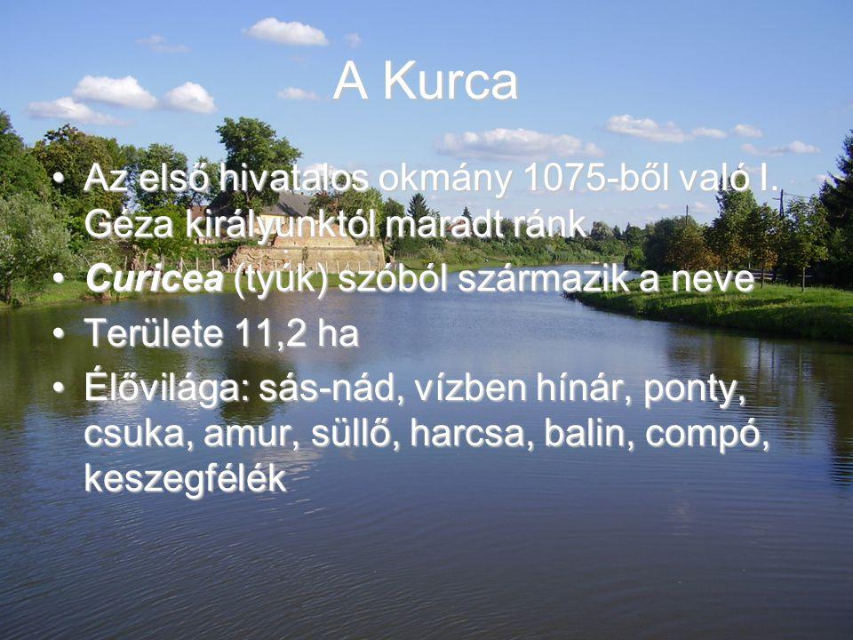 A Kurca Az első hivatalos okmány 1075-ből való I. Géza királyunktól maradt ránkAz első hivatalos okmány 1075-ből való I. Géza királyunktól maradt ránk