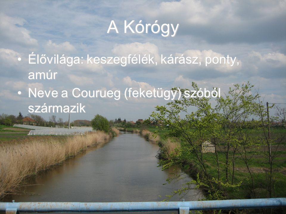 A Kórógy-tó Területe 1,2 haTerülete 1,2 ha Mesterséges tóMesterséges tó Élővilága: ponty, amur, kárász, keszegfélék, süllő, csuka, törpeharcsa, harcsaÉlővilága: ponty, amur, kárász, keszegfélék, süllő, csuka, törpeharcsa, harcsa A helyi Tó-fesztivált is itt rendezik a falu névadásának tiszteletéből…….A helyi Tó-fesztivált is itt rendezik a falu névadásának tiszteletéből…….