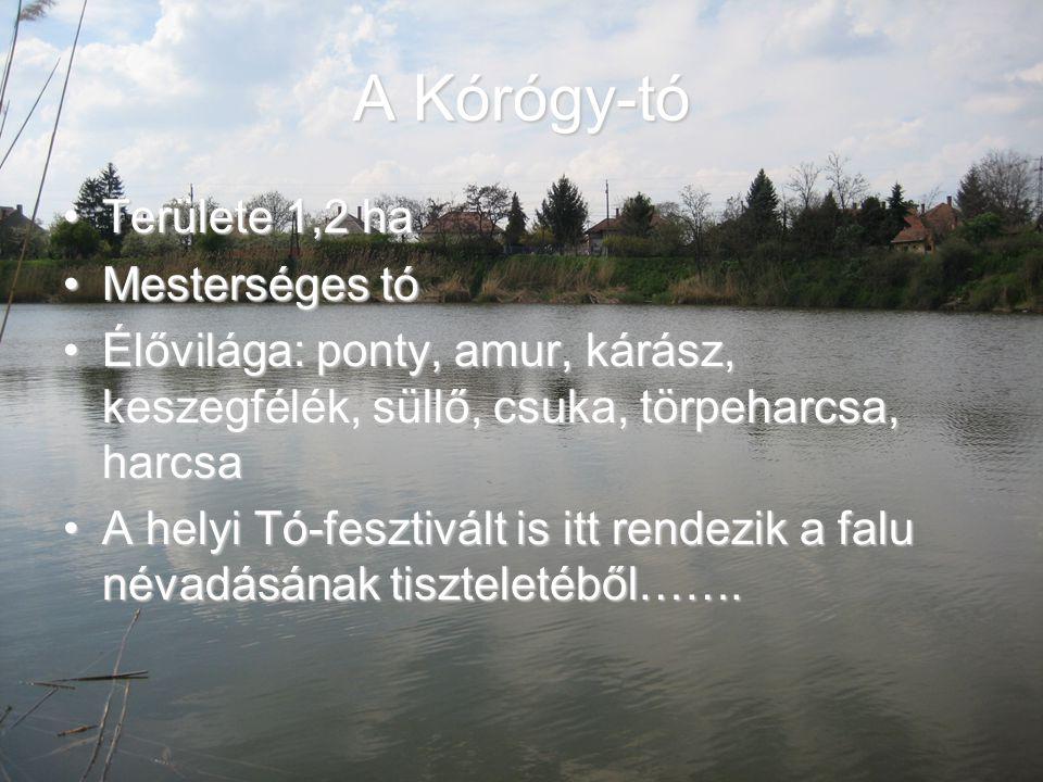 A Kórógy-tó Területe 1,2 haTerülete 1,2 ha Mesterséges tóMesterséges tó Élővilága: ponty, amur, kárász, keszegfélék, süllő, csuka, törpeharcsa, harcsa